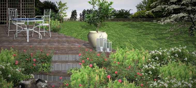 Trivelig uteplass med krypende roser og dvergfuru   enklere hage